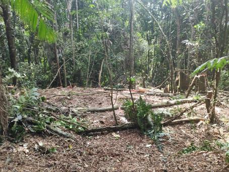 Polícia Ambiental flagra desmatamento com motosserra em São Lourenço da Serra