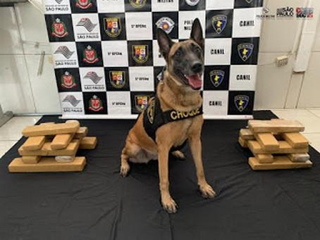 Cadela do Batalhão de Choque localiza 18kg de maconha em Osasco