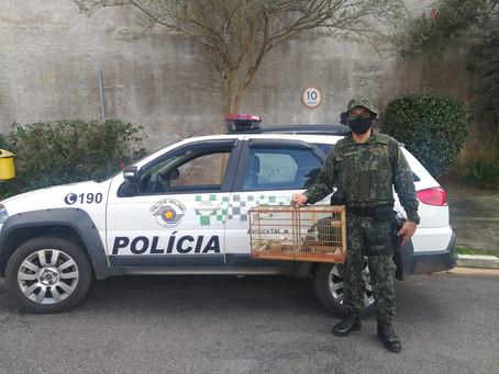 Polícia Ambiental resgata filhote de passarinho ferido na Granja Viana