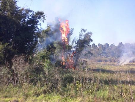 Itapevi: Prefeitura realiza campanha de conscientização contra queimadas