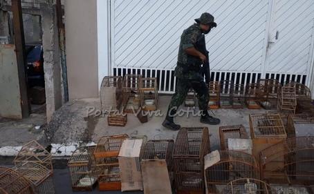 Polícia Ambiental apreende 51 pássaros em cativeiro em Itapecerica da Serra