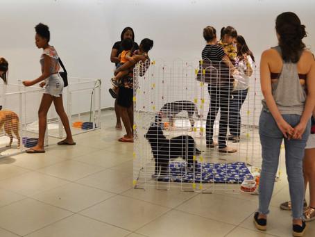 Raposo Shopping recebe feira de adoção de cães e gatos