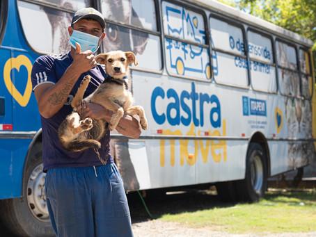 Itapevi abre novas inscrições para castração gratuita de cães e gatos