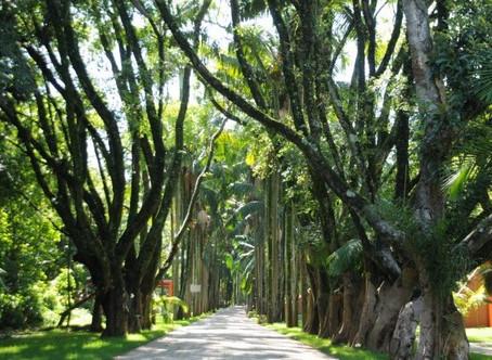Governo de São Paulo reabre mais seis parques urbanos esta semana
