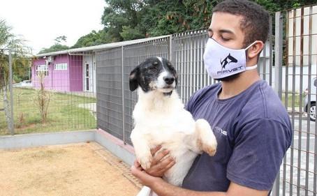 Barueri mantém adoção de cães e gatos durante pandemia de Covid-19