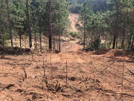 Cotia: Polícia Ambiental apreende máquina e flagra desmatamento no Caputera