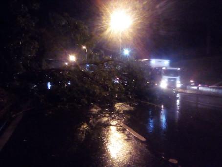 Chuva e vento derrubam árvore na Rodovia Raposo Tavares