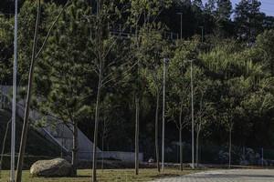 Itapevi: Plantio de árvores no Parque da Cidade já está na fase final