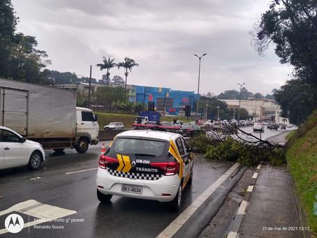 Granja Viana: Galho de árvore cai e interdita faixa da direita da Rodovia Raposo Tavares