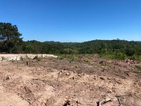 Polícia Ambiental recebe nova denúncia de desmatamento em Cotia