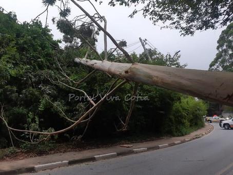 Granja Viana: Tombamento de árvore interdita Estrada do Capuava
