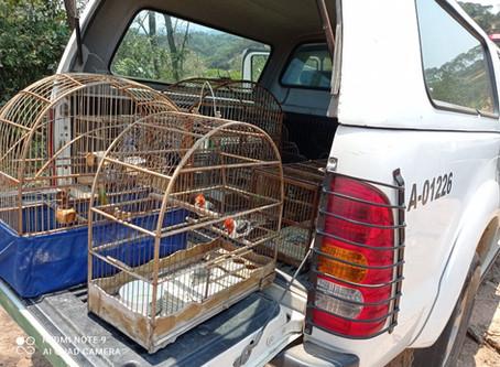 Após denúncia, Polícia Ambiental flagra e apreende aves em cativeiro