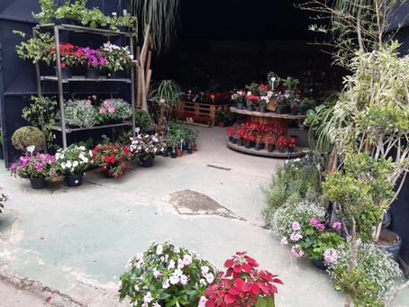 Osasco: Feira de plantas, flores e objetos de decoração começa dia 17/9