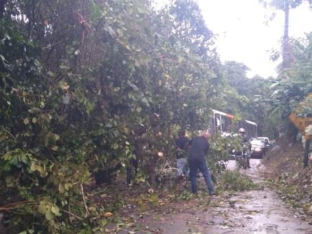 Queda de árvore interdita Estrada do Morro Grande, em Cotia