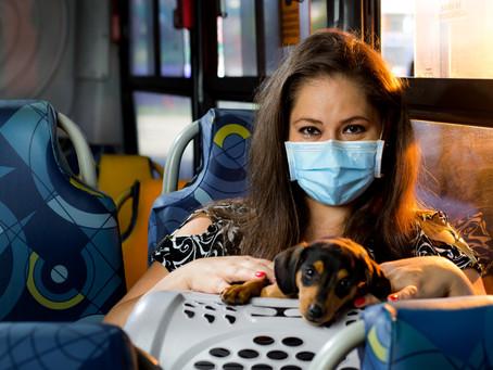 Itapevi autoriza transporte de animais de estimação em ônibus