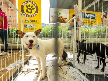 Itapevi realiza Feira de Adoção de Cães e Gatos nesta sexta-feira (05)