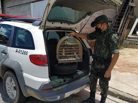Polícia Ambiental apreende aves em cativeiro e indicia seis pessoas por crime ambiental