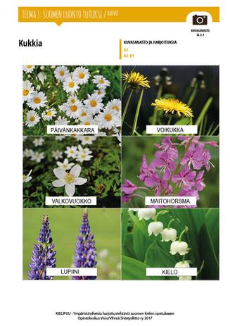 SL 2.1 Kukkia