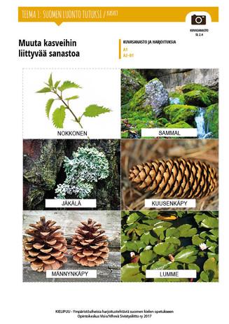 SL 2.4 Muuta kasveihin liittyvää sanastoa