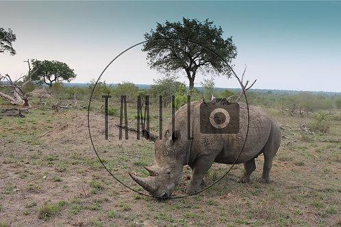 Rhino at lunch