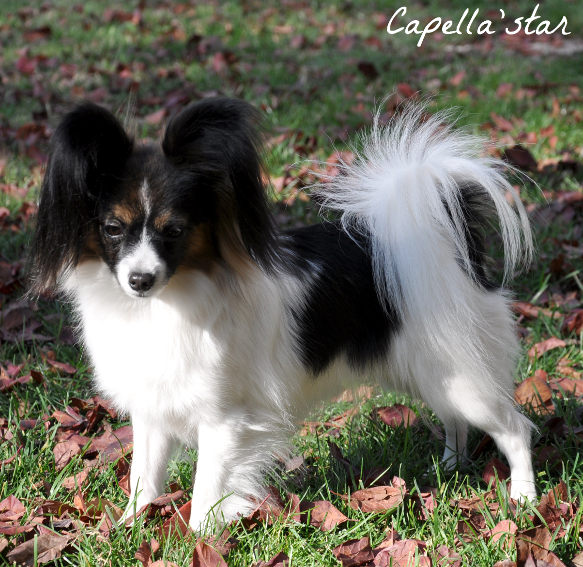 1 year 8 months - Sophie