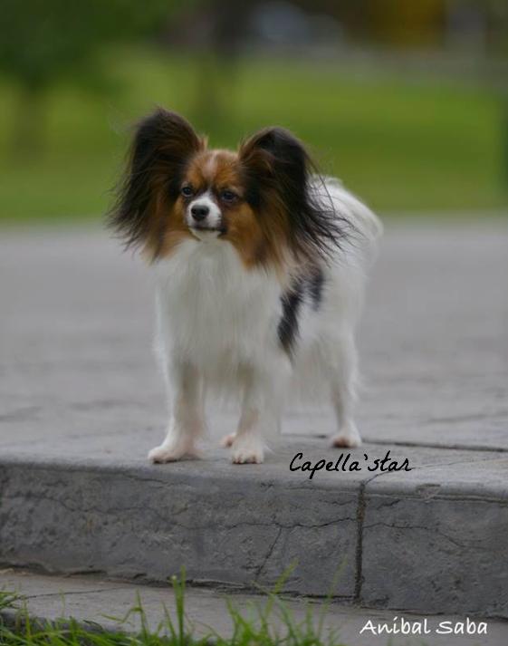 October 2015 - Bella