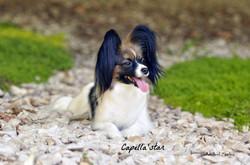 Diamondsun's Sophie de Capella