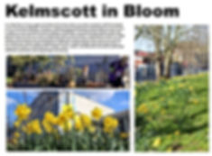 kelmscott in bloom.JPG