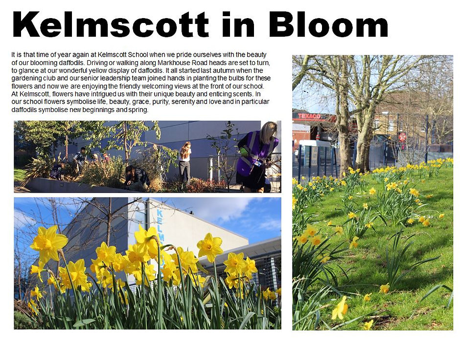 kelmscott in bloom.JPG