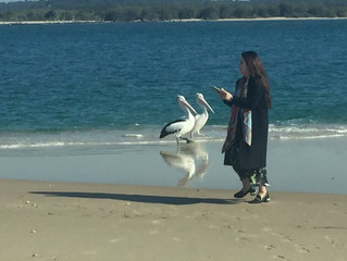 Pelicans put on a show at Couran Cove Island Resort