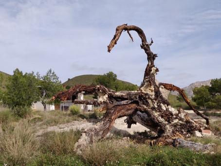 Castillejo Chorro, een mooie wandeling nabij Barinas.