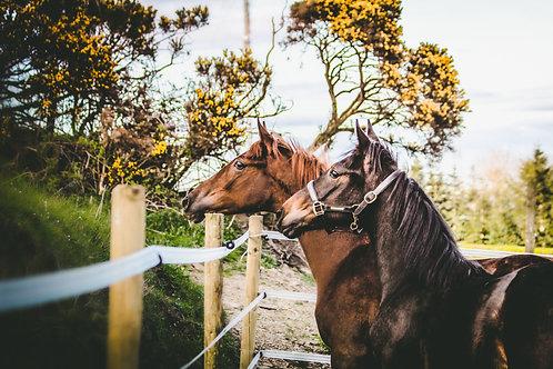 Rua & Storm Foal Photoshoot
