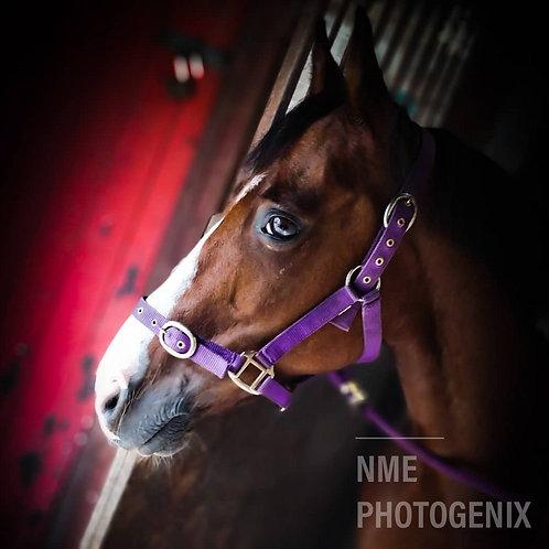 Equine Portraiture