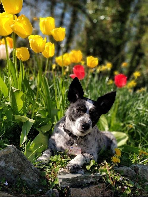 Pet Portrait - Julie