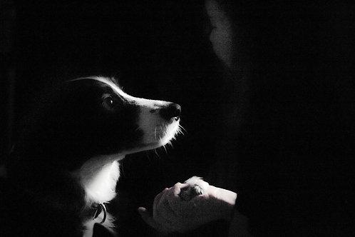 Pet Portrait - Luna