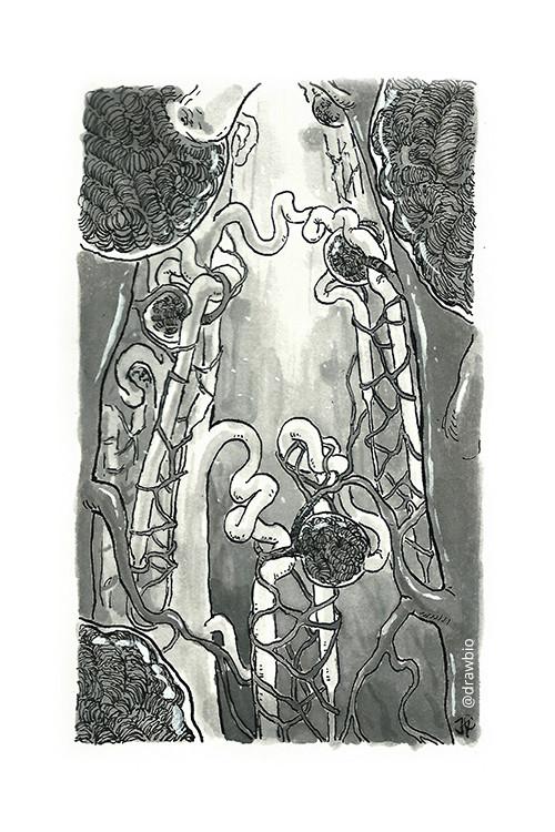 23 - Ancient & Glomeruli
