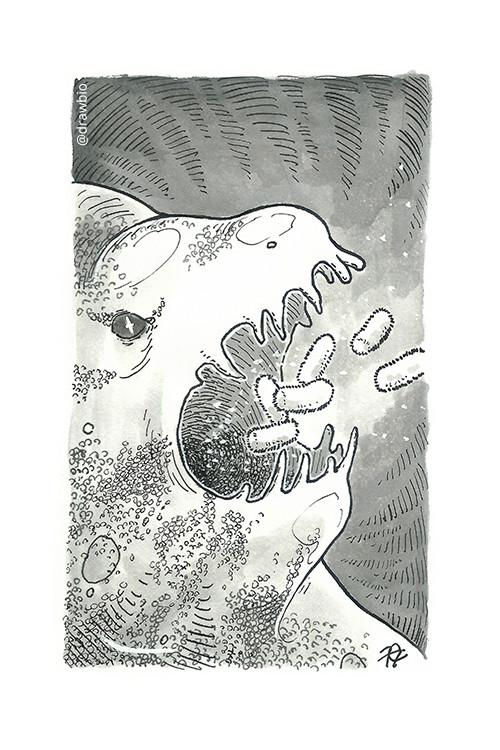 12 - Dragon & Cell Membrane