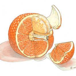 Orange Cross-section