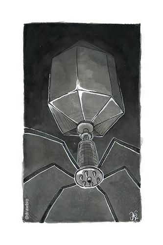 26 - Dark & Bacteriophage