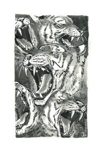 16 - Wild & Teeth
