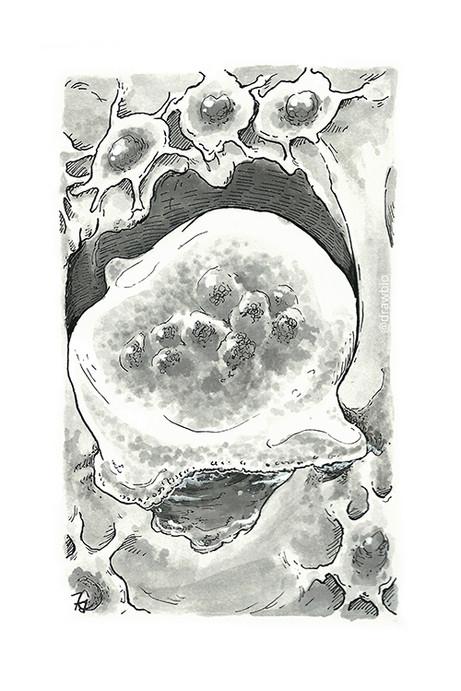 05 - Build & Osteoclasts