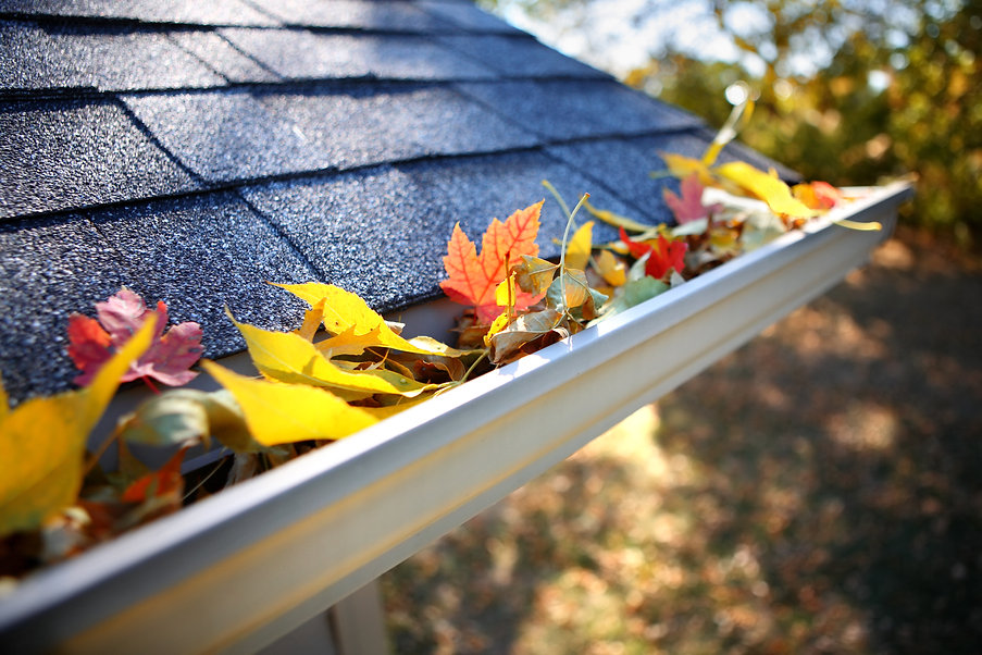 Rain gutter full of autumn leaves.jpg