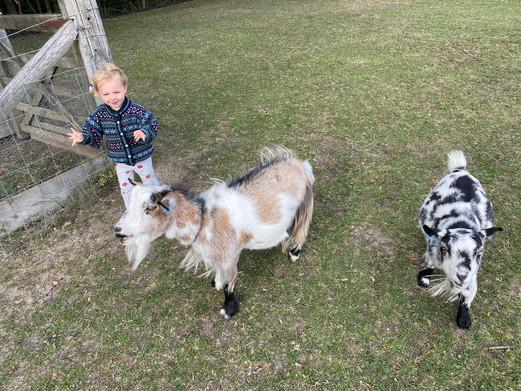 Friendly goats.jpeg