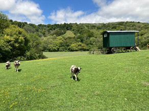Farm Glamping Holiday in the heart of the Hampshire Countryside