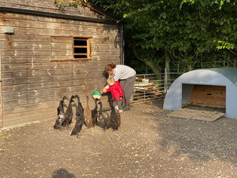 Feeding the ducks.jpeg