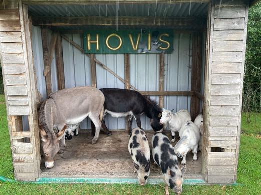 Farm animals.jpeg