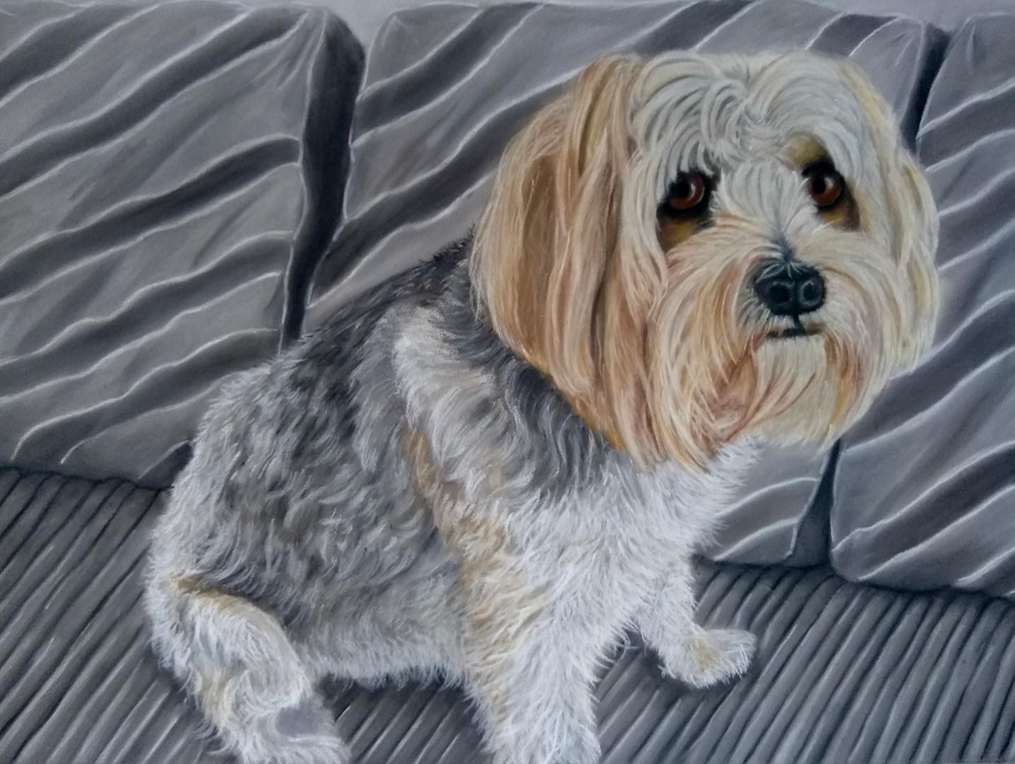 Pet Portrait Hampshire