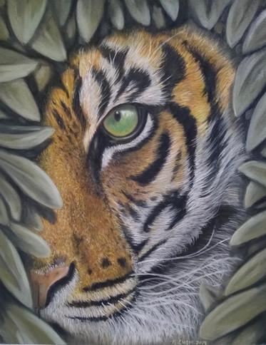 peeking tiger.jpg