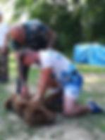 Occi Canin / Formation secourisme animalier