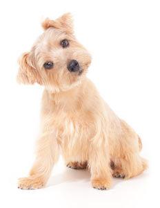 404-puppy.jpg